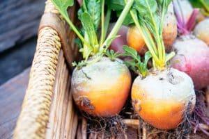 Lors de la plantation de légumes?