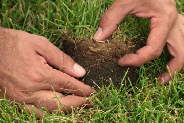 Qu'est-ce que le feutre racinaire et comment protéger sa pelouse ?