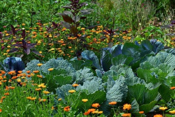 Quels sont les indispensables pour commencer son jardin potager bio ?