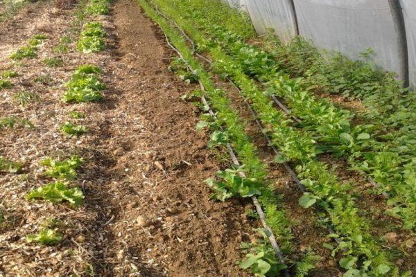 Quelle profondeur de terre pour les carottes ?